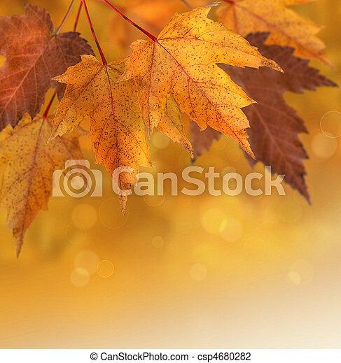 가을의 잎, 얕은 초점, 배경 - csp4680282