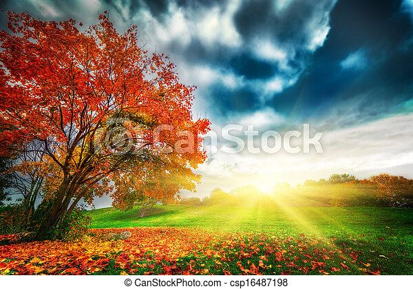 가을, 공원, 조경술을 써서 녹화하다, 가을 - csp16487198