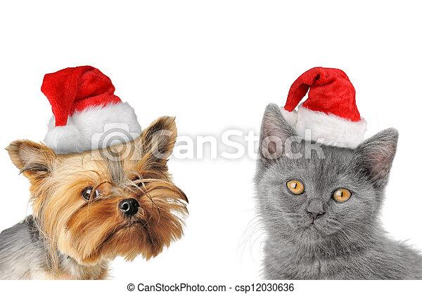 개, chrismas, 고양이 - csp12030636