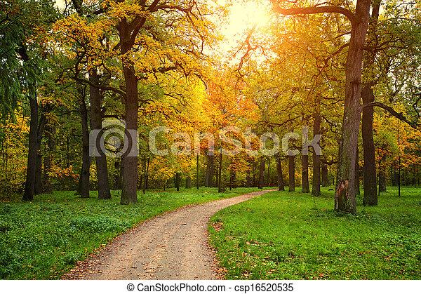 계절, 공원, 통로, 가을 - csp16520535