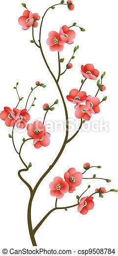 꽃, 버찌, 떼어내다, 가지, 배경 - csp9508784
