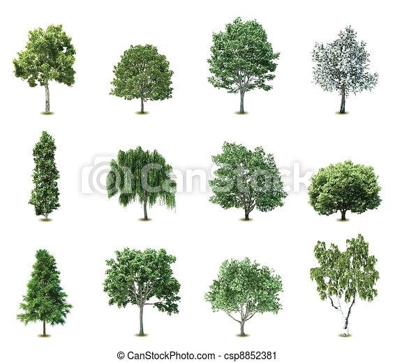 나무., 벡터, 세트 - csp8852381