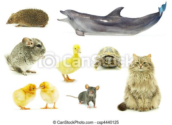동물 - csp4440125