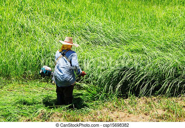 잔디, 노동자, 잔디 깎는 사람, 들판, 절단, 녹색 잔디 - csp15698382
