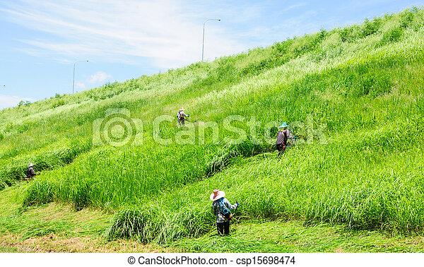 잔디, 노동자, 잔디 깎는 사람, 들판, 절단, 녹색 잔디 - csp15698474