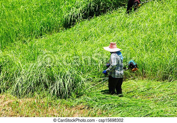 잔디, 노동자, 잔디 깎는 사람, 들판, 절단, 녹색 잔디 - csp15698302