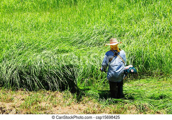 잔디, 노동자, 잔디 깎는 사람, 들판, 절단, 녹색 잔디 - csp15698425