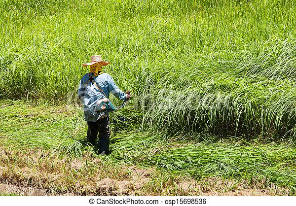 잔디, 노동자, 잔디 깎는 사람, 들판, 절단, 녹색 잔디 - csp15698536