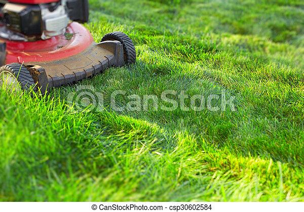 잔디, 절단, 녹색, grass., 잔디 깎는 사람 - csp30602584