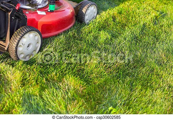 잔디, 절단, 녹색, grass., 잔디 깎는 사람 - csp30602585