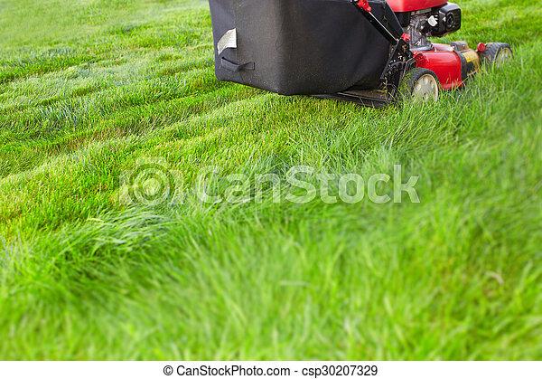 잔디, 절단, 녹색, grass., 잔디 깎는 사람 - csp30207329