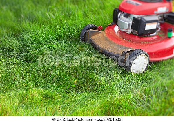 잔디, 절단, 녹색, grass., 잔디 깎는 사람 - csp30261503