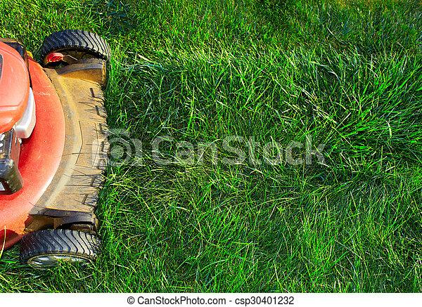 잔디, 절단, 녹색, grass., 잔디 깎는 사람 - csp30401232