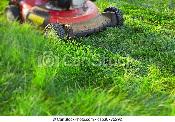 잔디, 절단, 녹색, grass., 잔디 깎는 사람 - csp30775292