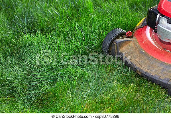 잔디, 절단, 녹색, grass., 잔디 깎는 사람 - csp30775296