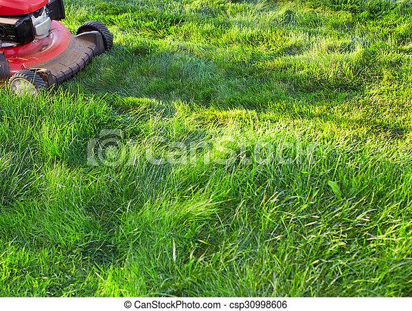 잔디, 절단, 녹색, grass., 잔디 깎는 사람 - csp30998606