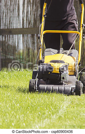 잔디, 정원, 잔디 깎는 사람, 절단, 녹색, 뒤뜰, 풀, service. - csp60900436