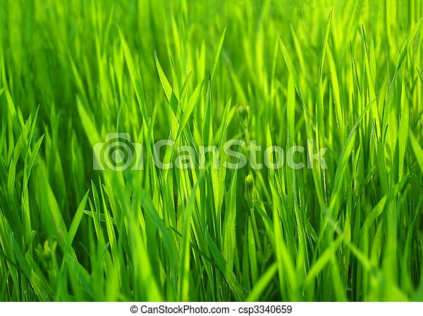 제자리표, 봄, grass., 녹색의 배경, 신선한, 풀 - csp3340659