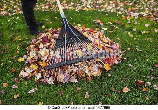 청소를 하는 것, 동안에, 야드, 가을 - csp11477965