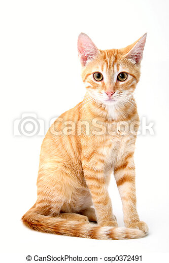 초상, 고양이과의 동물 - csp0372491