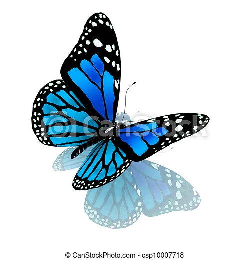 파랑, 색, 나비, 백색 - csp10007718