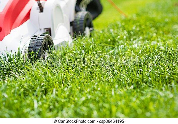 garden., 잔디 풀 베는 기계, 절단, 녹색 잔디 - csp36464195