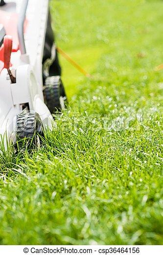 garden., 잔디 풀 베는 기계, 절단, 녹색 잔디 - csp36464156