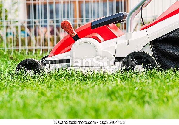 garden., 잔디 풀 베는 기계, 절단, 녹색 잔디 - csp36464158